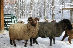 Breeding Group