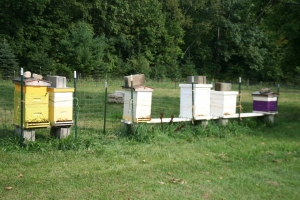Battened Down Hives