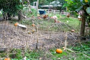 Pumpkin Wasteland