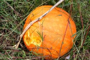 Pumpkin flavored Pumpkin